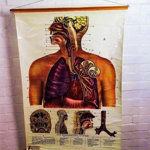 Adam Rouilly Large Respiratory System Anatomical Medical Chart Poster Wall Art Vintage Antique Industrial Retro Macabre