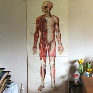 Vintage Full Body Nerves & Muscles Educational Medical School Chart Anatomy 1970S Nervous System