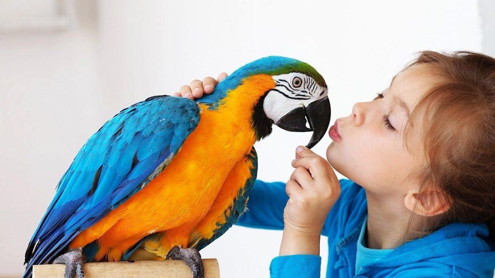 Friendliest to Children and Complete Beginners