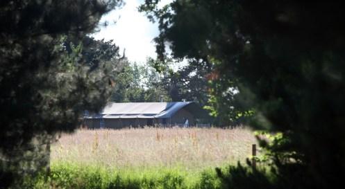 Lodge Tree View