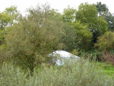 yurt through trees 2