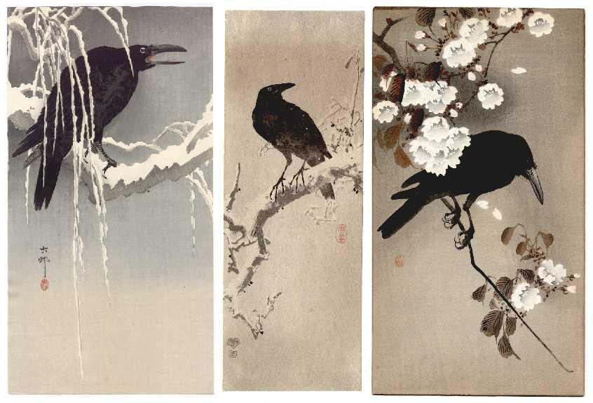Japanese crow
