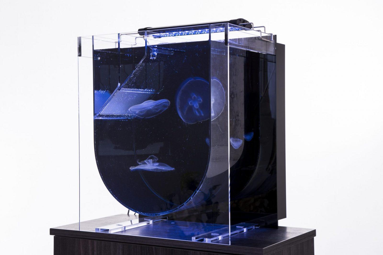 medusa desktop jellyfish aquarium