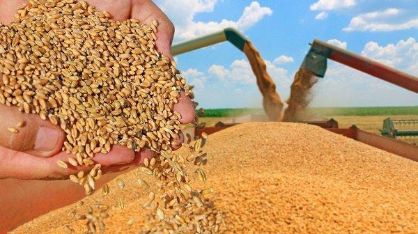 اوكرانيا تصدير أكثر من 14.5 مليون طن من الذرة إلى الخارج