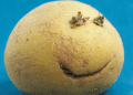 هل تخلص البطاطس النية العادية من حب الشباب على الجلد؟