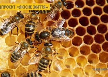 صناعة العسل في لوهانسك