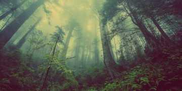 لماذا تنمو الأشجار في الليل: اكتشاف العلماء