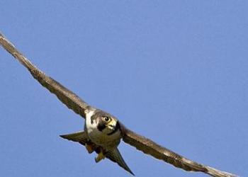 ما هو أكبر طائر في العالم؟