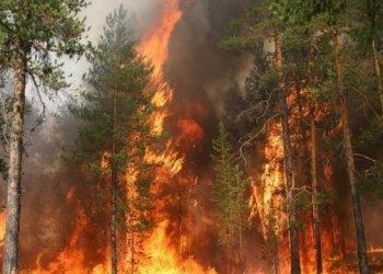 في اليونان - حرائق الغابات واسعة النطاق