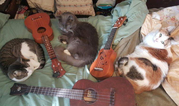 cats and ukuleles