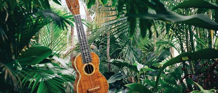 ukulele humidity