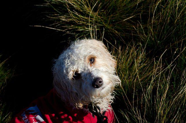 My Dog Oscar
