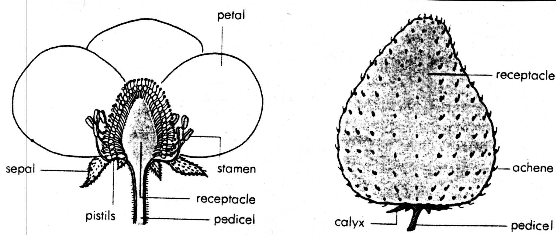 pumpkin seed diagram plant cell only pineapple parts elsavadorla