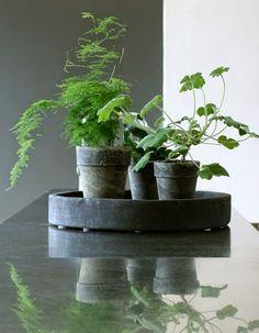 växtt