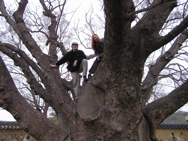 Probably prohibited, but that never stopped us from climbing this ancient tree