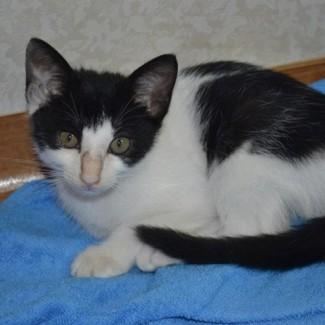 A kitten at the Animal Rescue Korea site