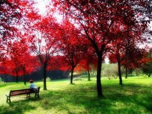 Villa_pamphili alberi rossi