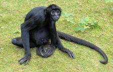 Operazione in Perù contro i trafficanti di animali selvatici riportati nel loro habitat