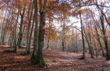 Sono 3 mila miliardi gli alberi sulla Terra. 8 volte il numero di quello che si pensava