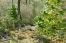 Messico: Corte suprema apre strada a liberalizzazione marijuana