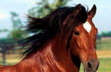 Studio britannico: i cavalli comprendono comportamenti ed espressioni umane