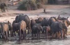 Elefanti: summit in Kenya per salvarli. Falò di 105 tonnellate di avorio