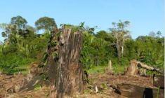 Foreste tropicali: persi nel 2018 12 milioni di ettari
