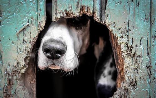 dog with head through door
