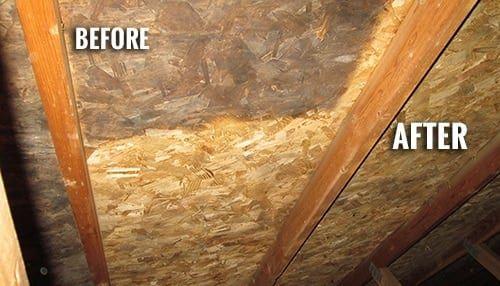 attic-mold-removal-toronto.