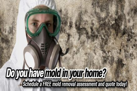 detect mold in home in toronto