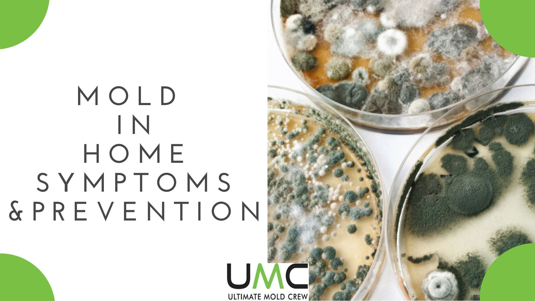 Mold IN HOME PREVENTION TIPS