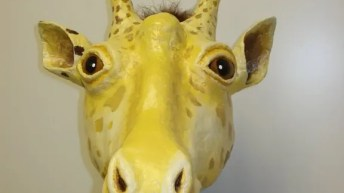 Giraffe detail photo, from the front.