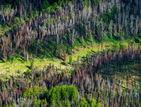 Trying to Plant a Trillion Trees Won't Solve Anything