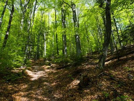 Ce que l'on sait de la mort de la jeune femme enceinte dans une forêt de l'Aisne, mordue par des chiens | LCI – LCI