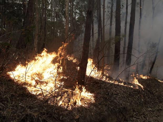 Les images des incendies qui ravagent l'Australie
