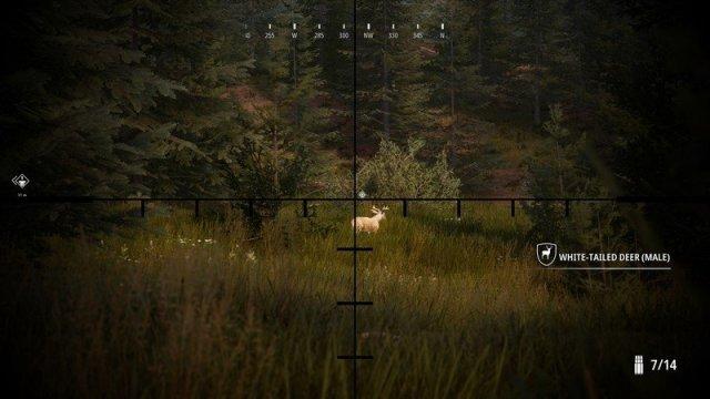 Hunting Simulator 2 Photo