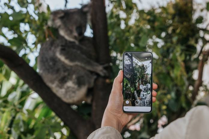 Google brings 3D Australian animals to your mobile device ...