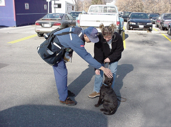 Young woman and her 12-week-old chocolate Lab puppy meet a mailman. They meet outdoors and the puppy is in a sit while the mailman leans over and pats his head. The woman gives the puppy a treat as this happens