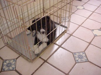 pup-in-crate