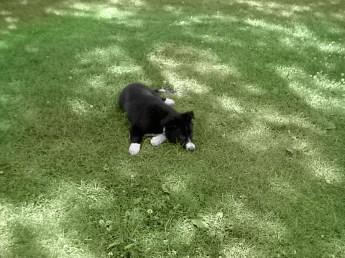 puppy-taking-a-rest-bw