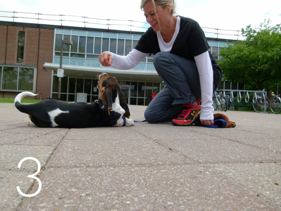 Still squatting, the young woman is holding her hand directly above a ten- week-old Bassett Hound puppy's nose who is lying down