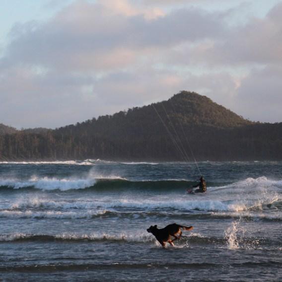 beachdog_07