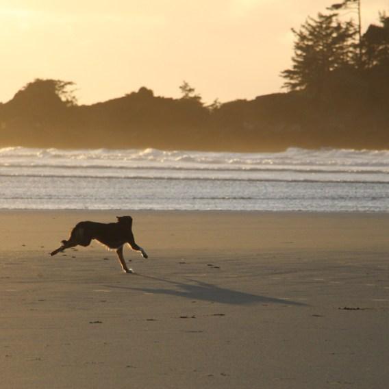 beachdog_09
