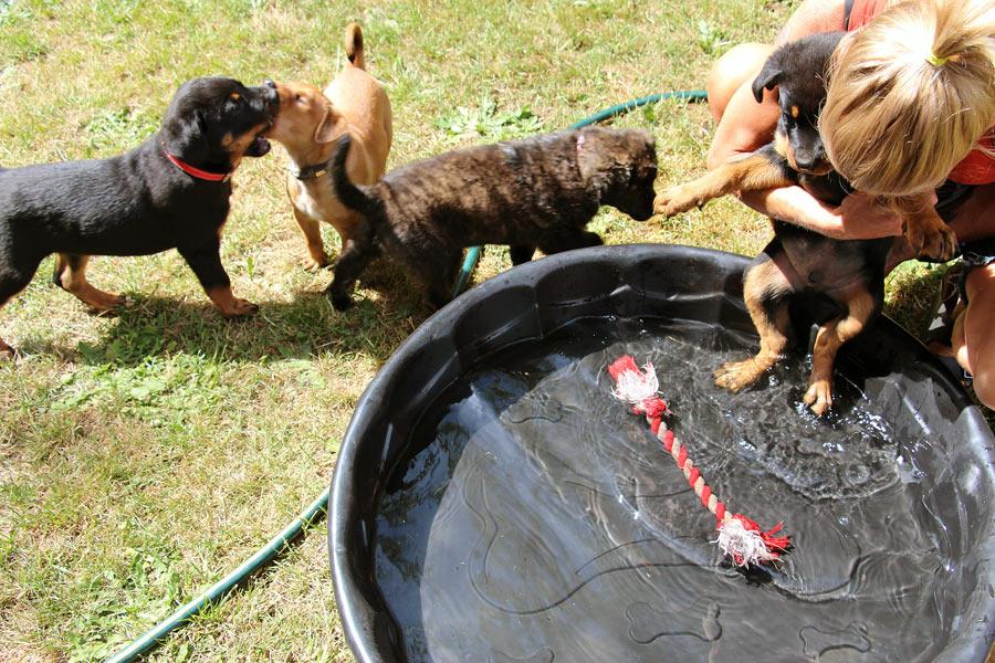 puppyfosterenriched_08