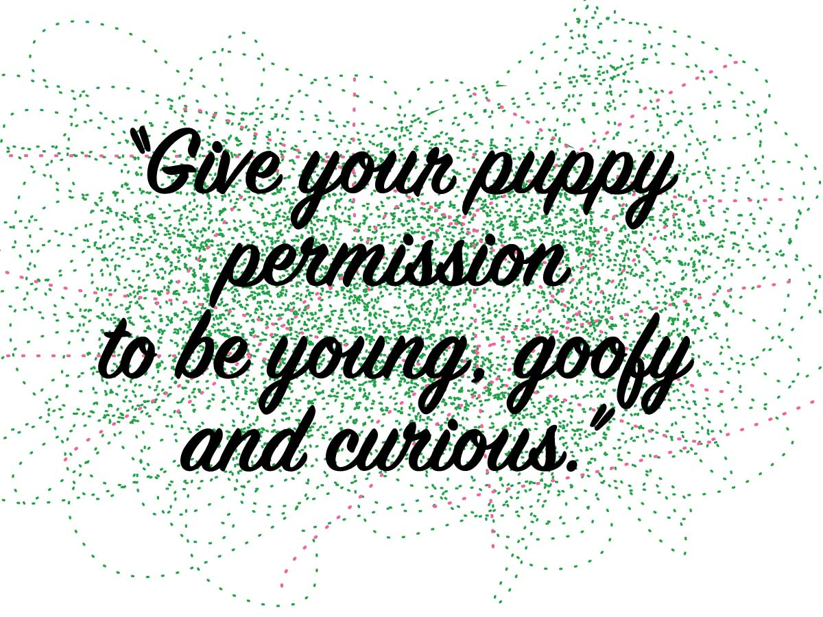 "This is a text graphic which reads: ""Give your puppy permission to be young, goofy and curious."" #germanshepherd #labrador #longbeachdogtrainer #fathersday #dogpsychology #trainingcesarsway #lbc #boxer #4thstlb #trotsdogtraining #longbeachdogs #longbeachdogtraining #longbeach #dogbehavior #rottweiler #walking #rottiworld #dog #rottidobemix #rotti #dobermanpuppy #pit #petsmart #dobe #puppy #greatdane #doberman #pitbullsofinstagram #rott #dogtrainer"