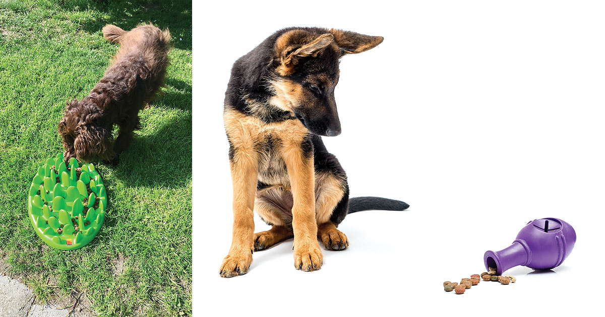 A composition of two different pictures. The photo on the right is a of a german shepherd puppy sitting, looking at a food stuffable rubber toy. There is some kibble spilled out of the toy. The photo on the left is of a brown poodle hunting for kibble on a snuffle styled mat.
