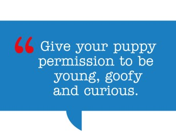 pull quote: Give your puppy permission to be young, goofy and curious.