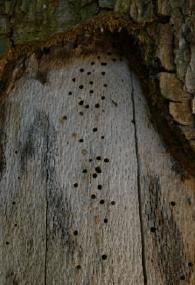Termite Holes