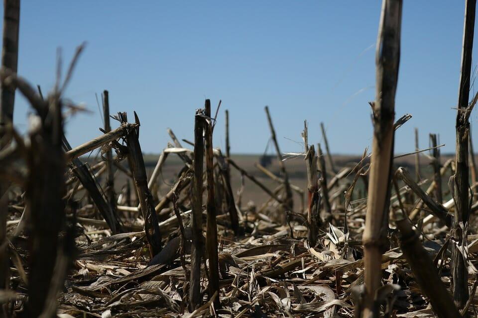 l'agroalimentare perderà un miliardo