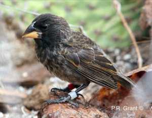 Il Big Bird: nuova specie